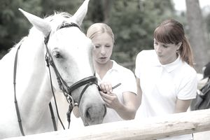 Mentor showing student how to adjust horse harness