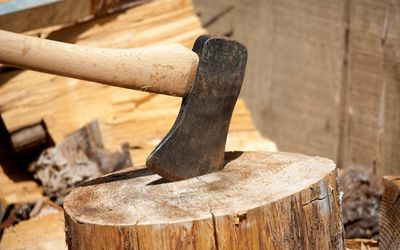 How to Buck a Tree: Cutting Logs for Maximum Yield