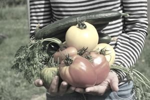 Fresh picked vegetables from a local farm