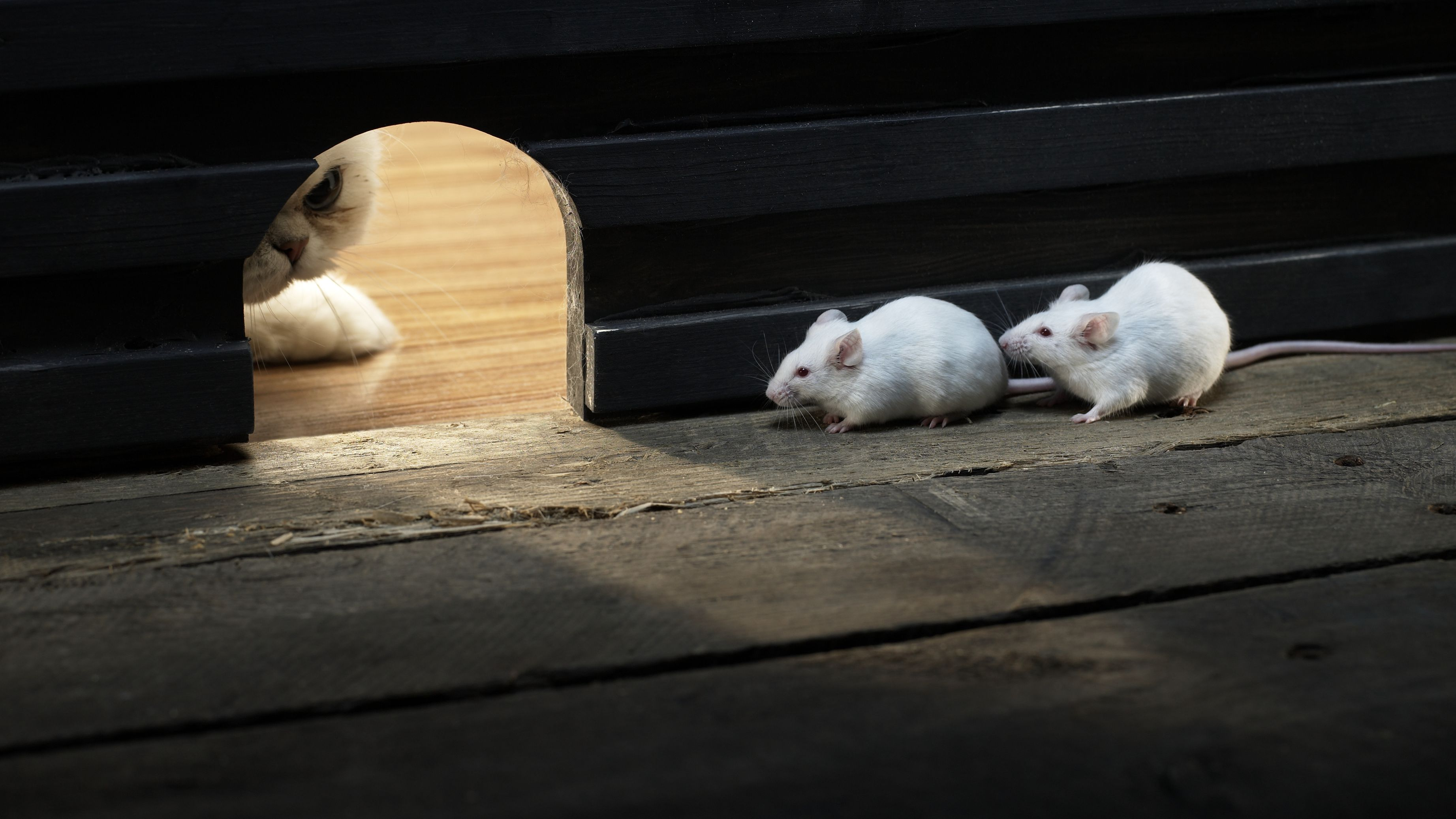 Signs of Mice in Your Rental Property