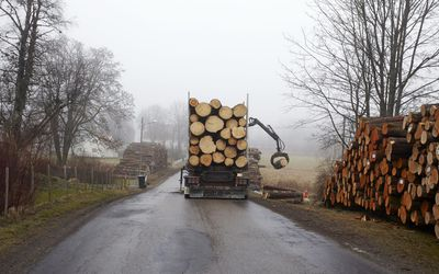 Standing Timber Prices For Loggers