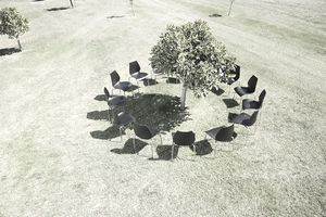 chairs around tree