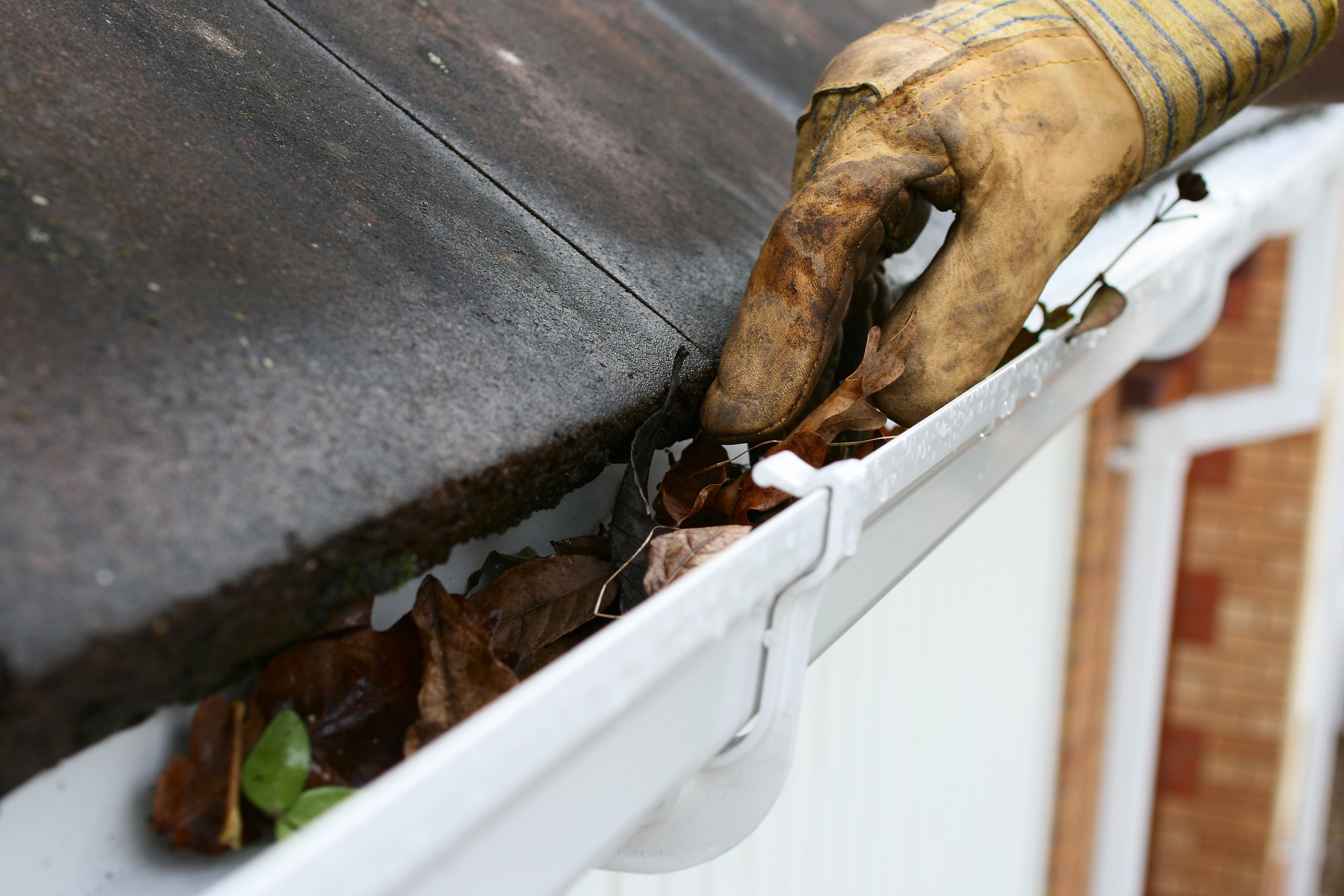 Closeup of a gloved hand cleaning gutters