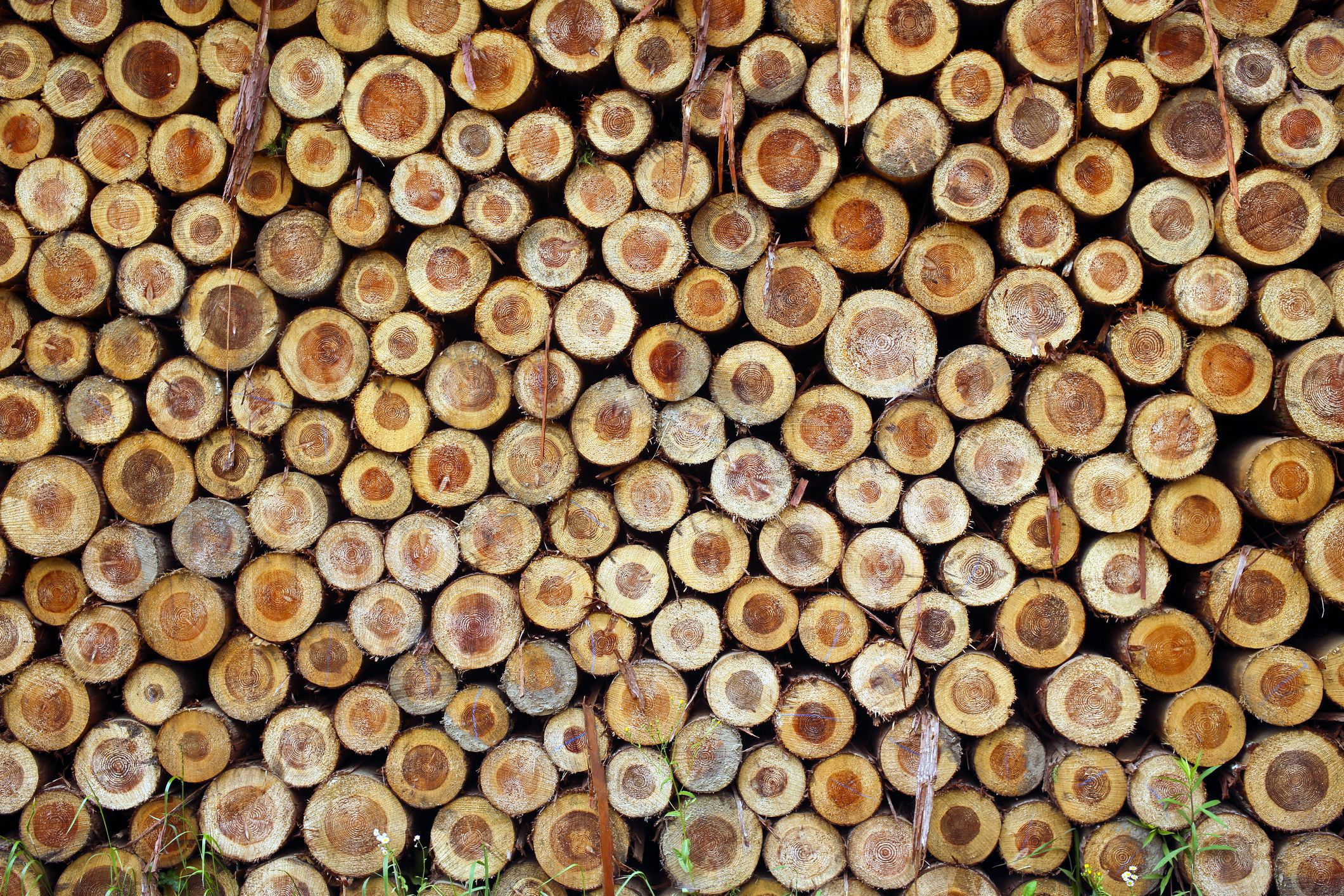 Calculating Timber Prices: A Formula For Sawmills