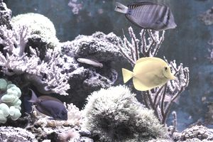 A home saltwater aquarium with fish and corals