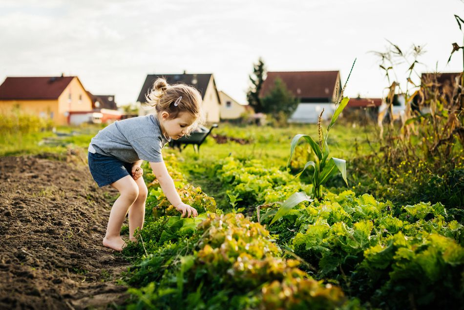 Young Girl Helping Family With Harvest At Urban Farm