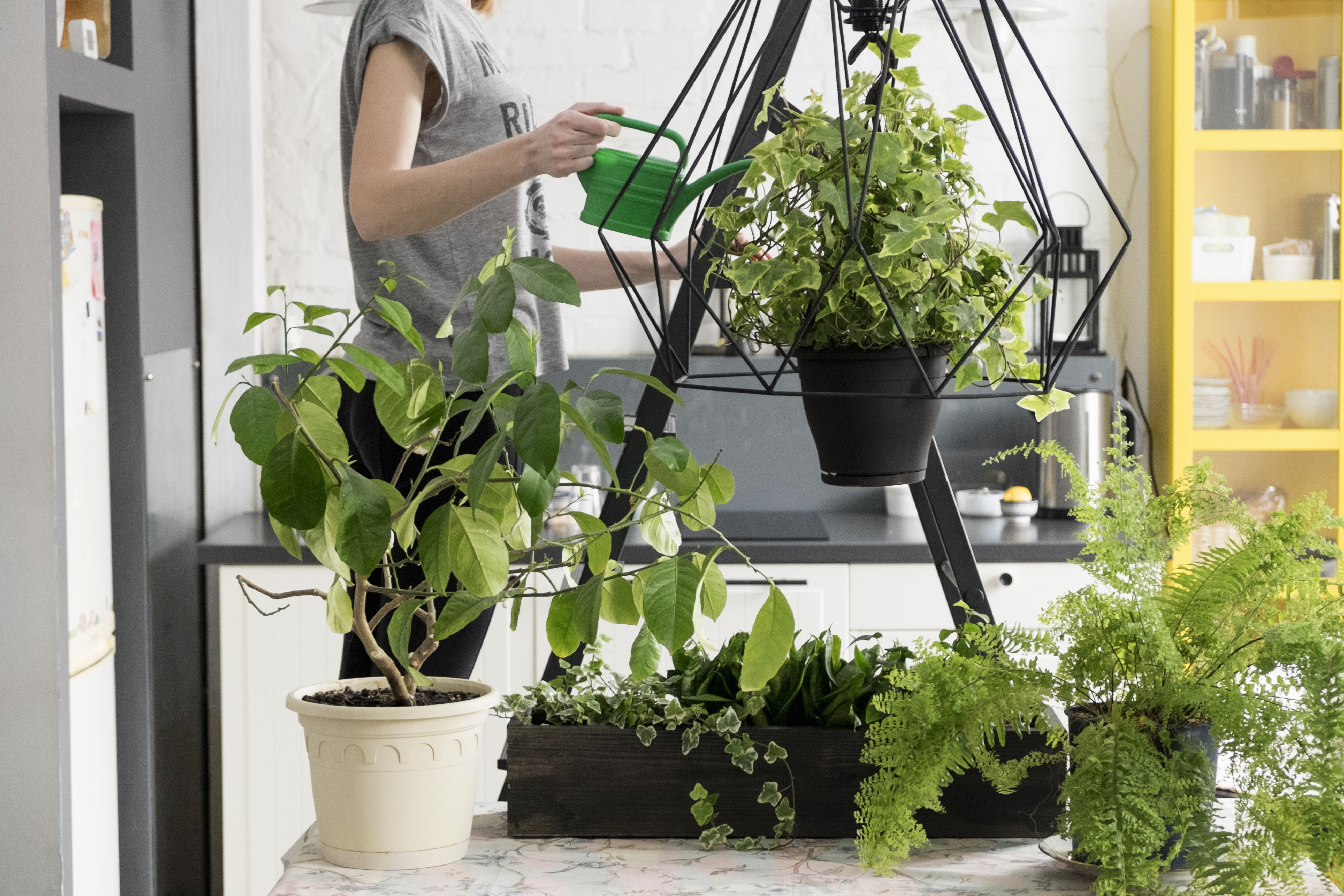 Starting an Indoor Plant Business on lawn equipment, weighing equipment, gardening equipment, fertilizer equipment, plant equipment, hunting equipment, farming equipment, wedding equipment, washing equipment, mowing equipment, landscaping equipment, pond equipment,