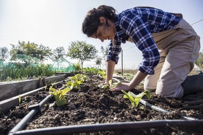 Woman planting crops in garden beds