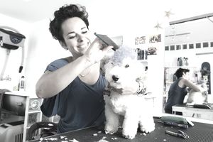 Pet hair dresser with punk style dog