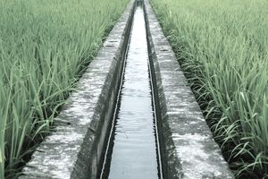 Irrigation ditch on an organic farm