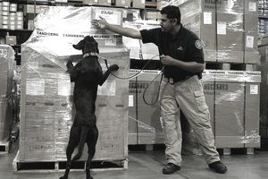 dog and man inspecting cargo at airport