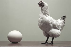 Chicken standing on table by large egg