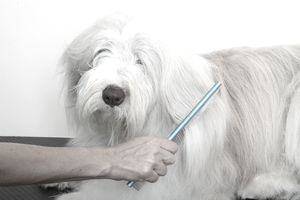 Dog being groomed with a comb