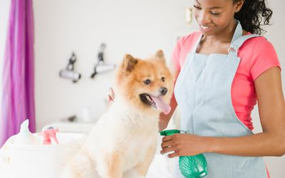 How to Start a Successful Dog or Cat Food Business