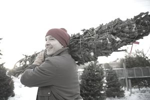 Tree lot owner carrying Christmas tree on shoulder