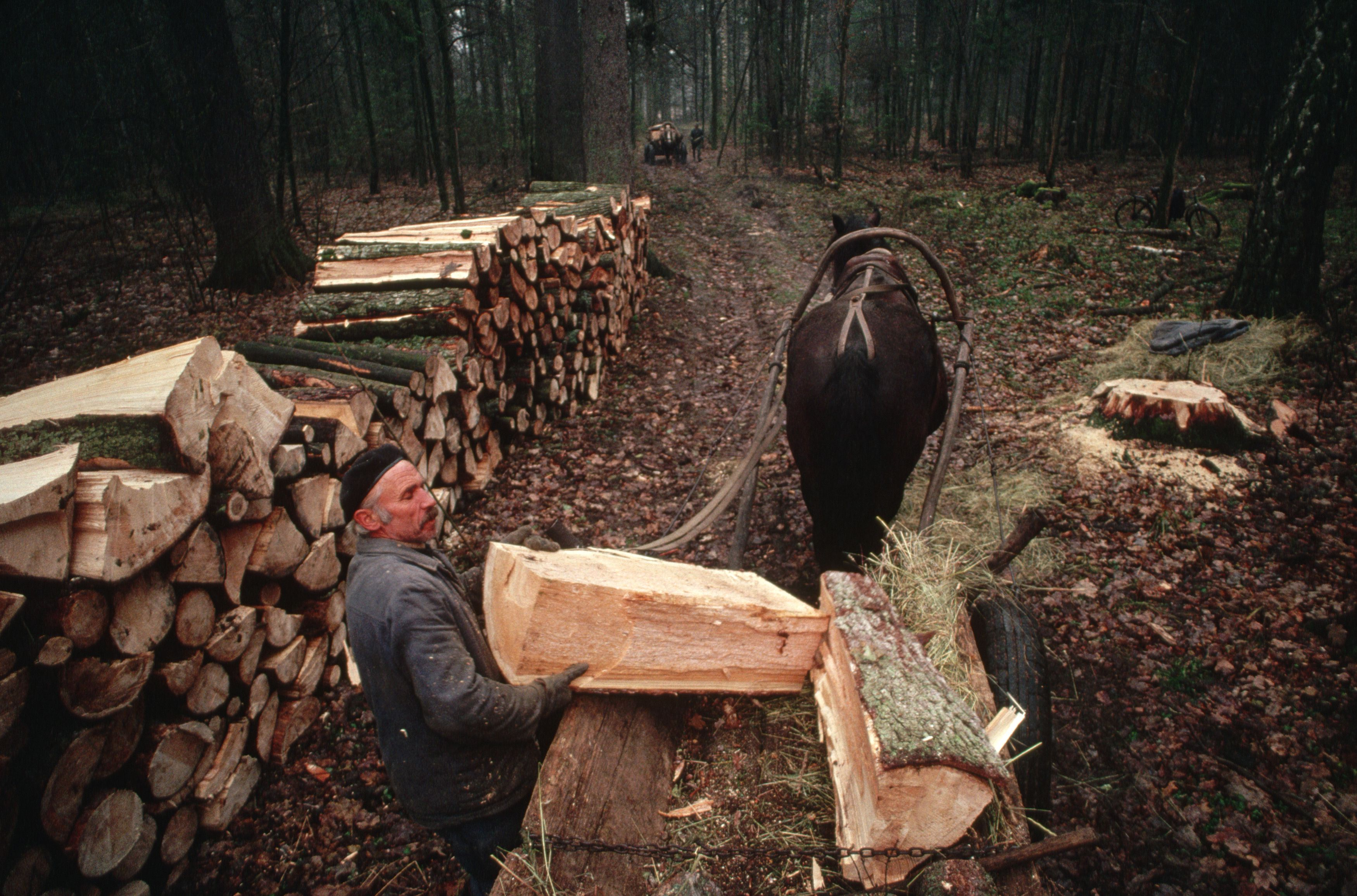 Small Scale Logging Business Ideas