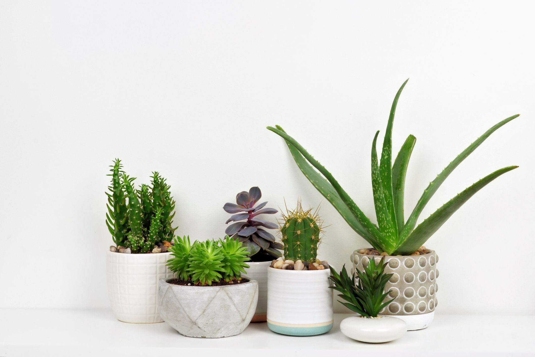 Sansevieria Plant Feng Shui best indoor office plants for working at home