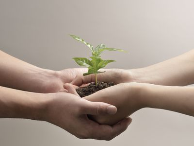 Four hands holding growing seedling