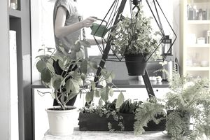 How To Start An Indoor Plant Care Business