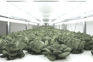 Grow Light Options for Indoor and Vertical Farming