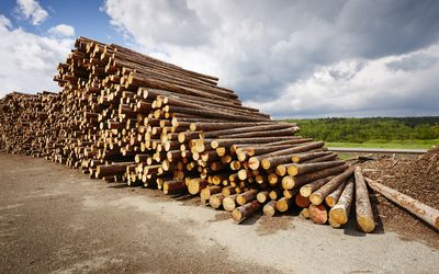 Timberking Sawmills: Review and Benefits
