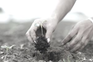 person planting seedling in soil