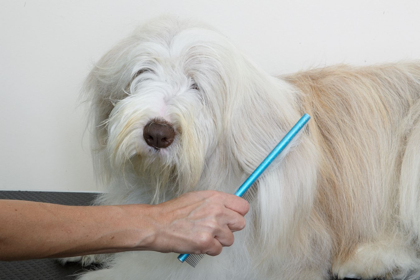 The Pros and Cons of Starting a Pet-Grooming Business
