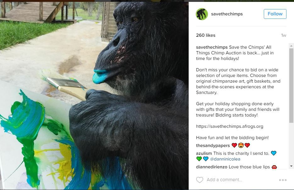 Save the Chimps Instagram post