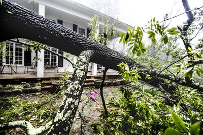 Large tree falls in front of house