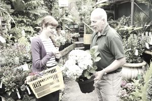 Florist gives customer advice on growing hydrangeas