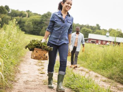 Two people working on an organic farm. Carrying baskets of fresh picked vegetables.