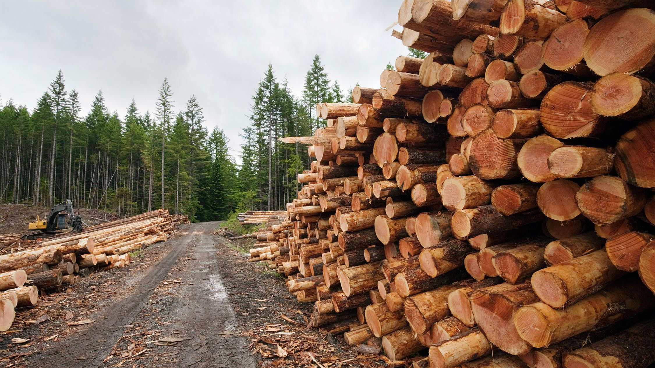 How to Find Logging and Timber Companies