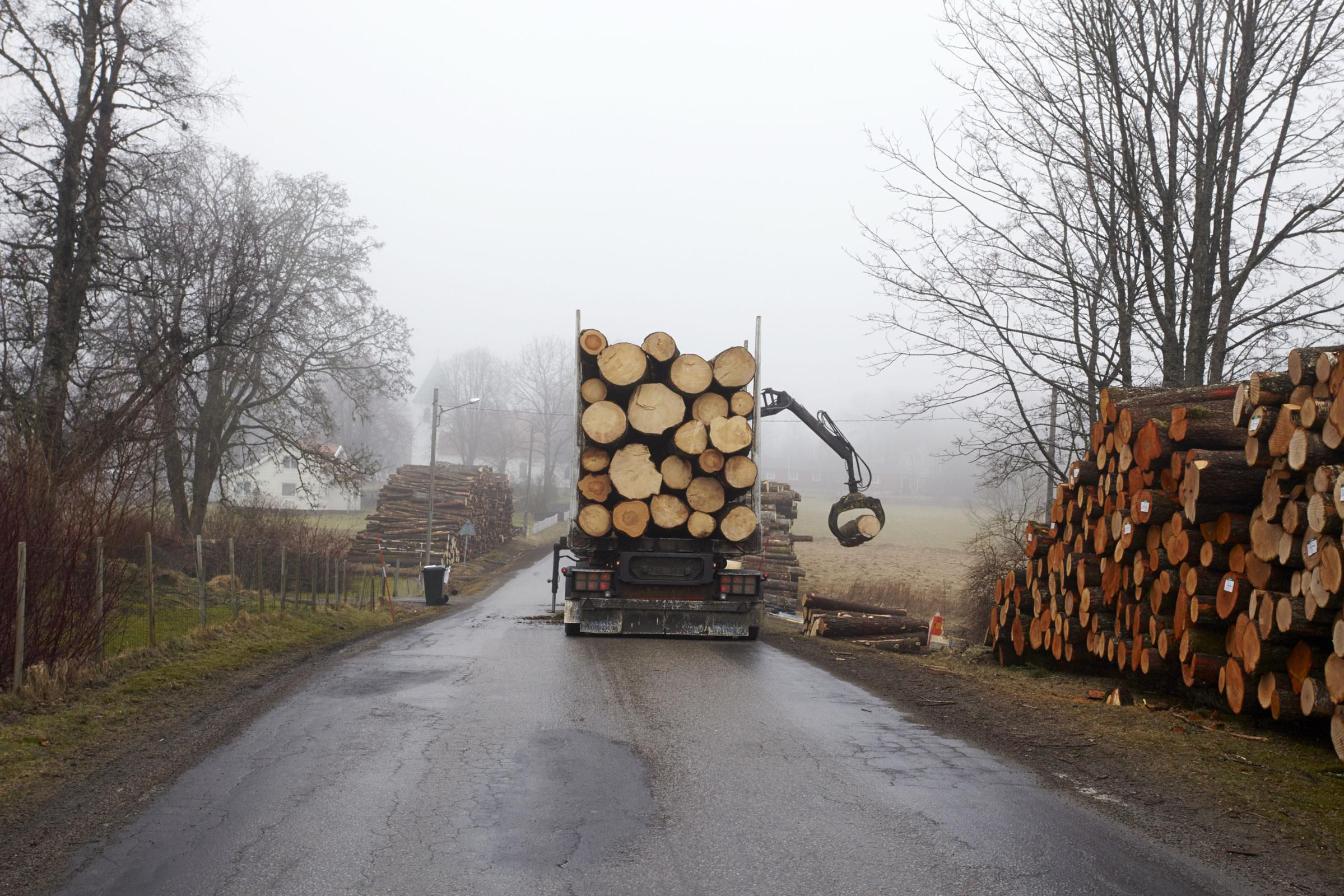 Where to Find Wood Logs for Sale
