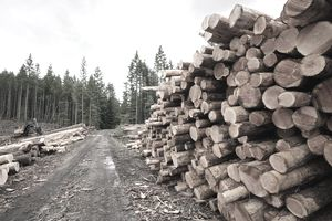 A stack of fresh cut logs cut by logging companies stacked beside a road.