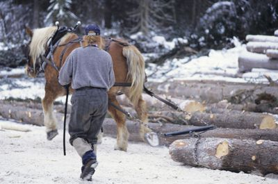 A small scale logger using a horse to pull a log to the mill.